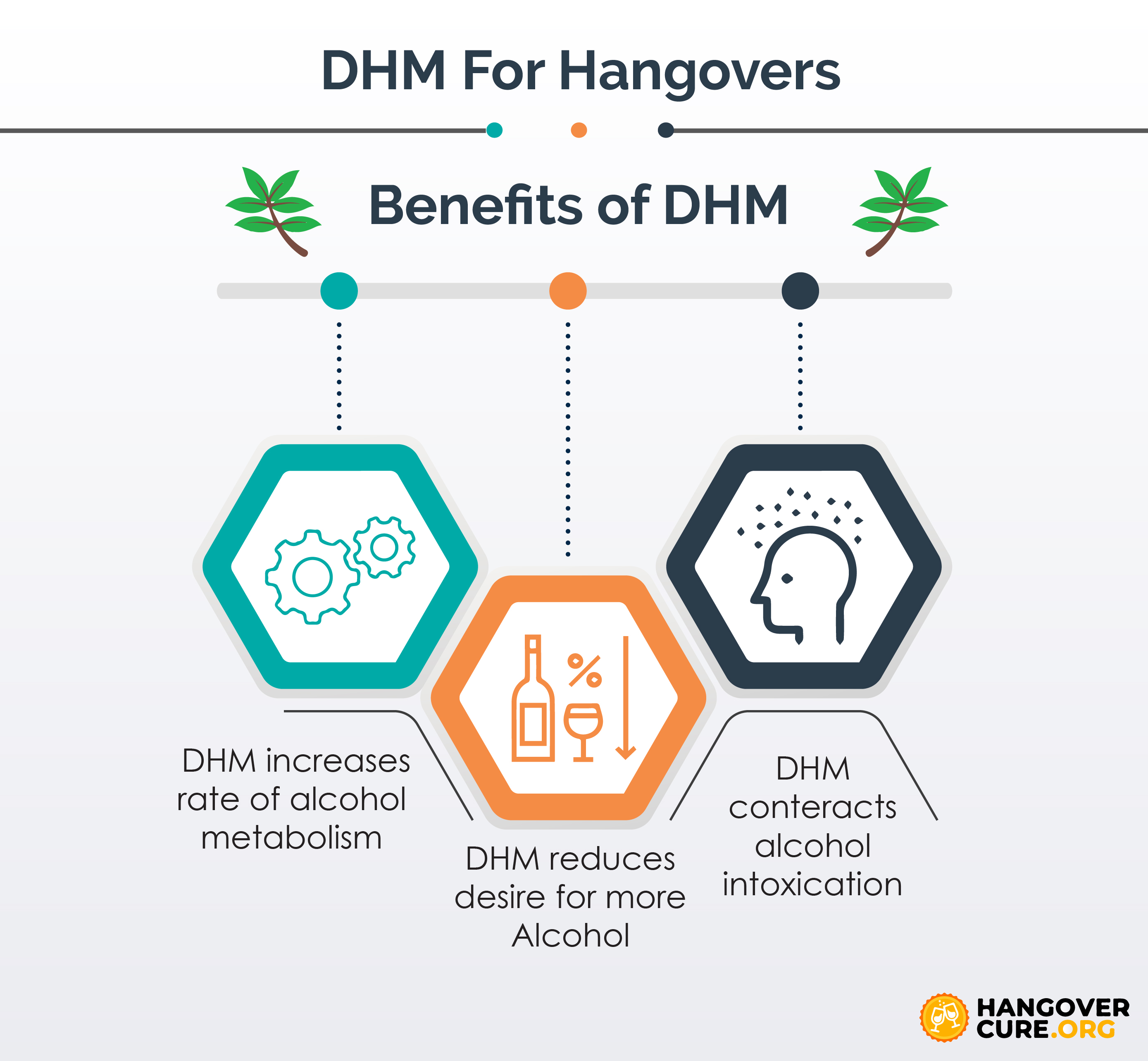 DHM for hangovers infographic
