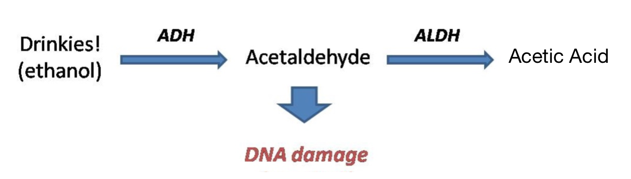 alcohol to acetic acid